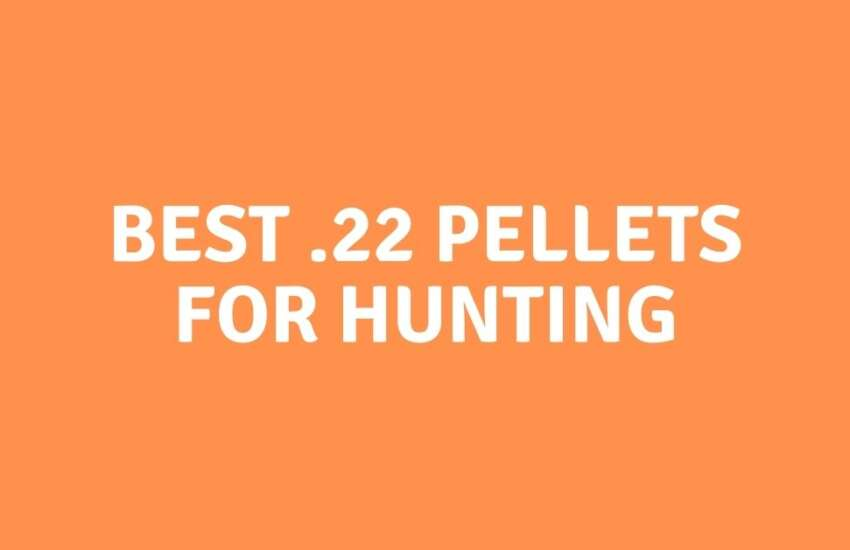 Best .22 Pellets For Hunting