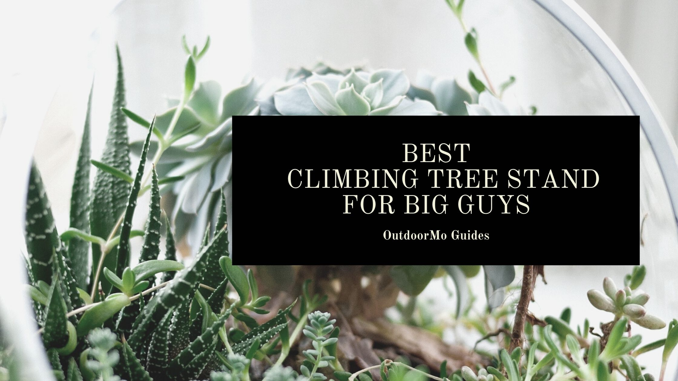 The Best Climbing Tree Stand For Big Guys